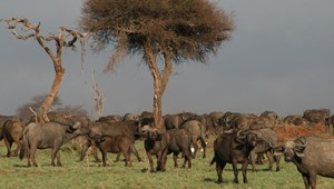 Serengeti Ndutu Plains 3.jpg